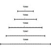 BOTTOM-T-RUBBER-COMBINED-DRAWINGS.jpg